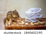 A Busy Chipmunk Nibbles Away At ...