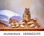 Cute Chipmunk Poses With A Bag...
