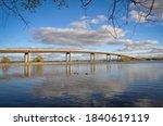 Canada geese swimming under the bridge