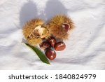 Chestnuts Thorns Shell Isolate...