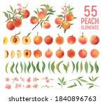 peach fruit watercolor element... | Shutterstock .eps vector #1840896763