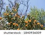 A Multitude Of Orange Flowers...