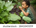 little african american kid boy look at plant using magnifier, want to know about nature everything, learn gardening and plants, flowers - stock photo