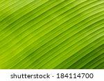 green banana leaf background... | Shutterstock . vector #184114700
