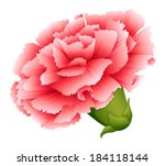 Illustration of a fresh carnation pink flower on a white background