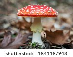 Poisonous Mushroom Of Amanita...