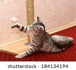 Stock photo playing cat on domestic background curious cat domestic cat little cat playing in apartment 184134194