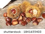 Chestnuts Shell Thorns Isolate...