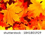 Autumn Landscape With Bright...