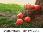 Halloween Orange Pumpkins...