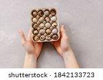 Man holds quail eggs on gray...