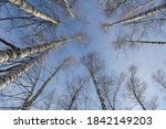 tops of bare birch trees on the ... | Shutterstock . vector #1842149203