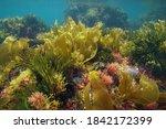 Colors Of Marine Algae...