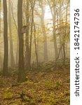 Autumn Foggy Forest With Bird...