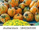 Spooky Warty Halloween Pumpkin...