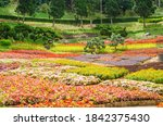 colorful of blooming flowers...   Shutterstock . vector #1842375430