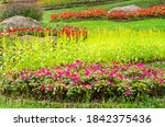 colorful of blooming flowers...   Shutterstock . vector #1842375436