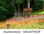 colorful of blooming flowers...   Shutterstock . vector #1842375439