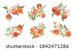 watercolor peach vector... | Shutterstock .eps vector #1842471286