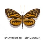 tropical butterfly collection...   Shutterstock . vector #184280534
