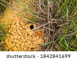 Spider\'s Burrow On The Ground ...