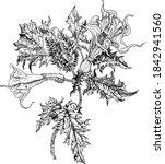 datura stramonium  thorn apple...   Shutterstock .eps vector #1842941560