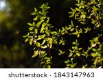 leaves in the forest bush... | Shutterstock . vector #1843147963