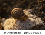 Snail Sits On A Piece Of Bread...