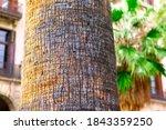 Palm Tree Trunk Bark Details ....