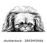 Pekingese Dog. Sticker On The...