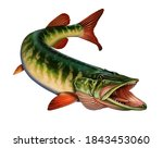 American red-tipped pike with open mouth to attack fish. Grass pike illustration isolate realism art.
