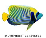Emperor Angelfish  Pomacanthus...