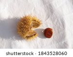 Chestnuts Thorns   Isolated Fo...