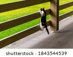 Red And Black Cat Sits On The...