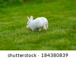 Stock photo funny baby white rabbit running in grass 184380839