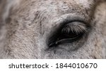 Portrait Of A Horse. Eye Of A...