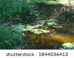 Quiet Stagnant Water In A Swam...