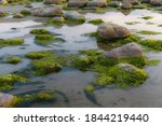 Green Algae Covered Boulders At ...