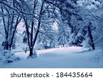 snowy forest thicket | Shutterstock . vector #184435664