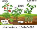landscape with vegetable garden....   Shutterstock .eps vector #1844604280