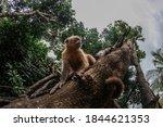 Primates in natural habitat  ...