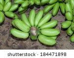 green banana bundle   Shutterstock . vector #184471898