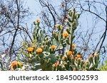 View Of Multiple Orange Flowers ...