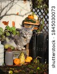 Autumn Still Life With Grey Cat ...
