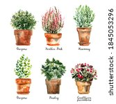 flowers and herbs in ceramic... | Shutterstock . vector #1845053296
