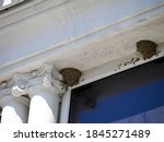 Nest Swallows Above The Eaves...