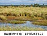 Wetland Meadow Of Lush Grass...