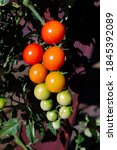Vertical Photo Of Clusters Of...