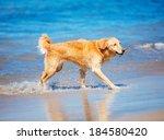 happy young golden retriever. ... | Shutterstock . vector #184580420