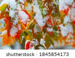Falling Snow And Autumn Leaves...